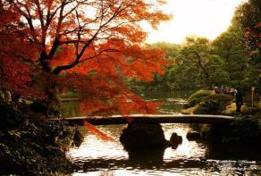 Momijigari: i colori magici dei boschi del Giappone