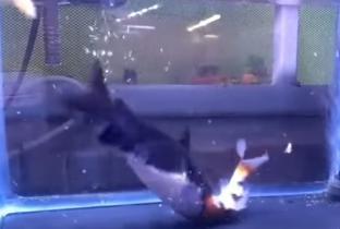Tiscali adsl fibra notizie dall 39 italia e dal mondo mail for Pesce gatto acquario