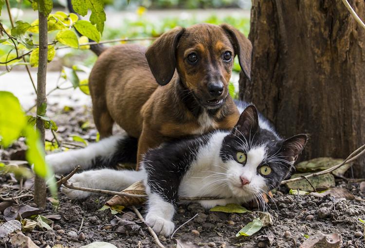 upgrape polizza cane gatto
