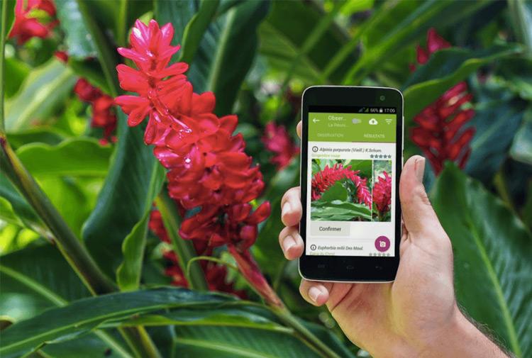 app riconoscere piante animali